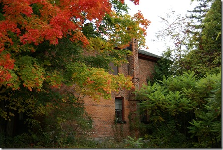 Fall_color_2