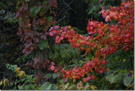 Fall_color_4